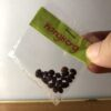 Kangkong Seeds